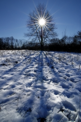 Tree in the Snow with the Sun Shining Through the Branches